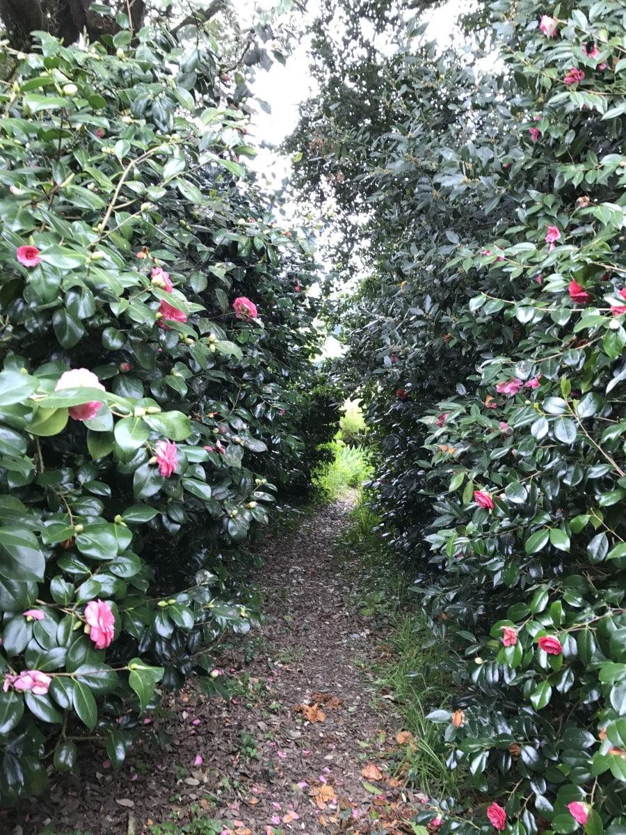 Carwinion House Gardens (1)-min