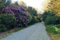 Carwinion House Gardens (10)-min
