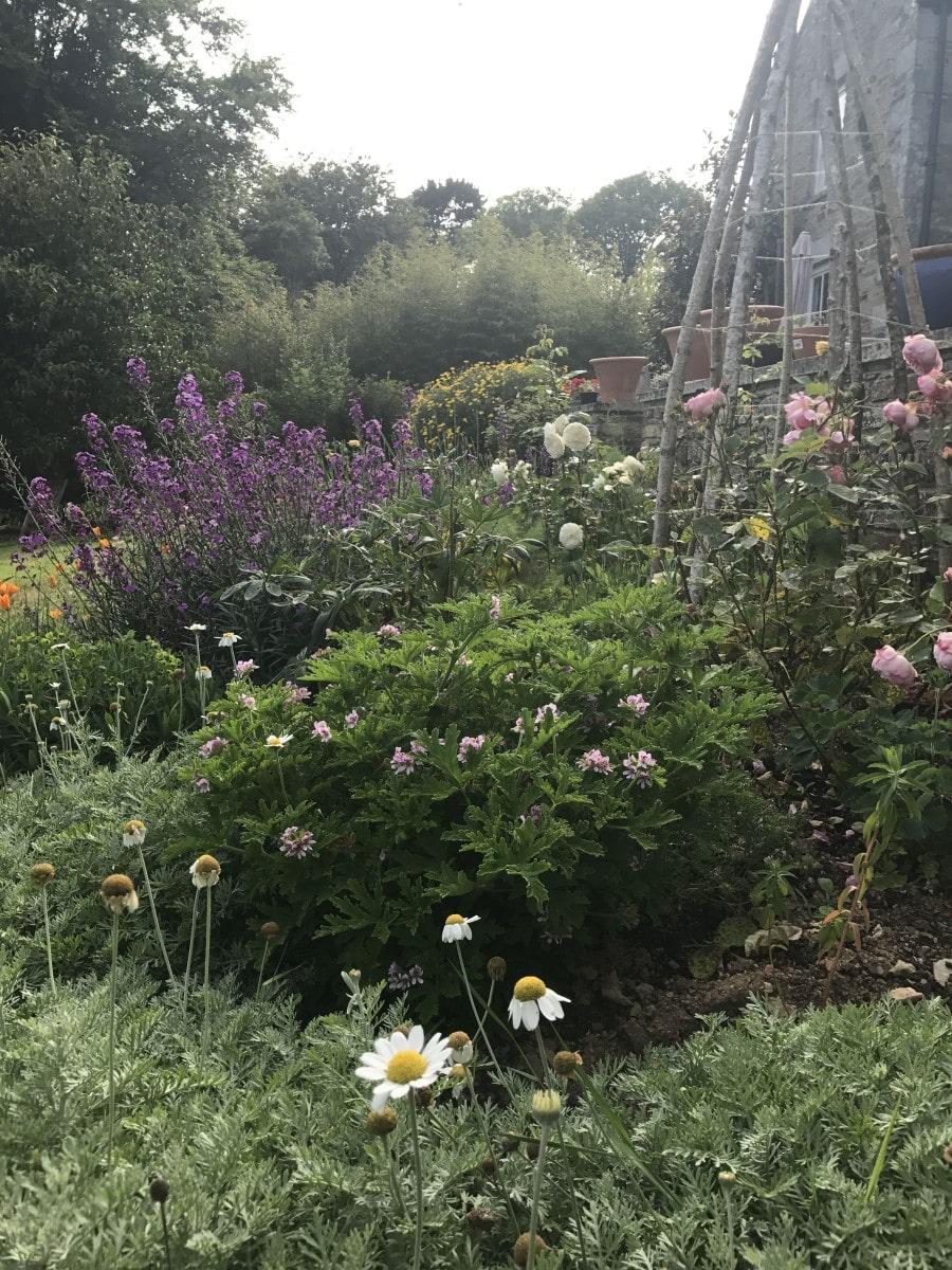 Carwinion House Gardens (11)-min
