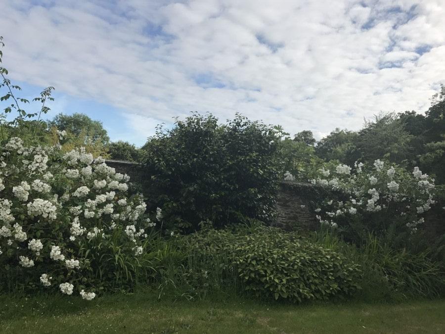 Carwinion House Gardens (2)-min