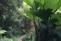 Carwinion House Gardens (3)-min