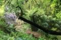 Carwinion House Gardens (4)-min