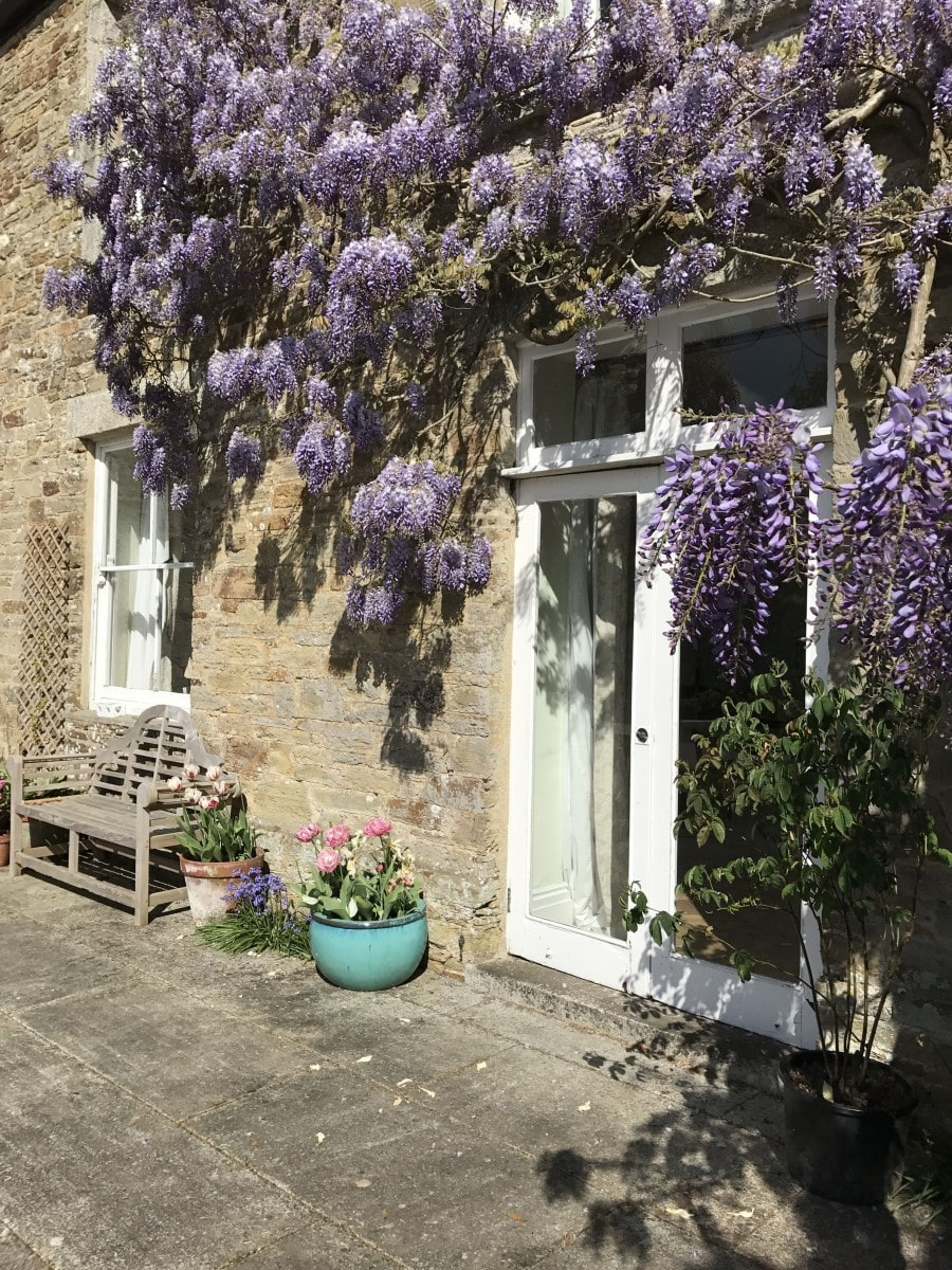 Carwinion House Wisteria Patio-min