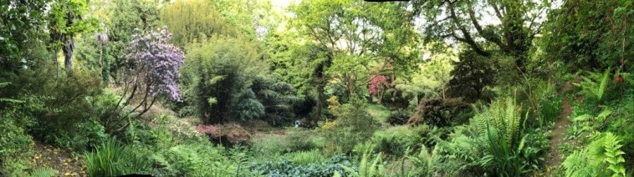 Carwinion House wild Victorian gardens-min